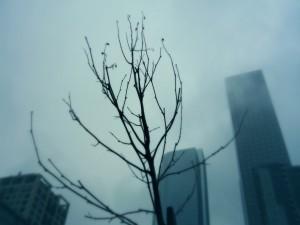 Postal: Árbol en el invierno de la ciudad