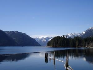 Troncos en el lago