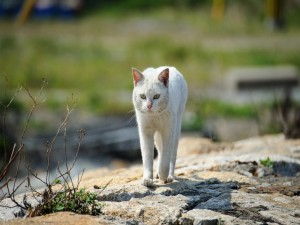 Gato blanco callejero