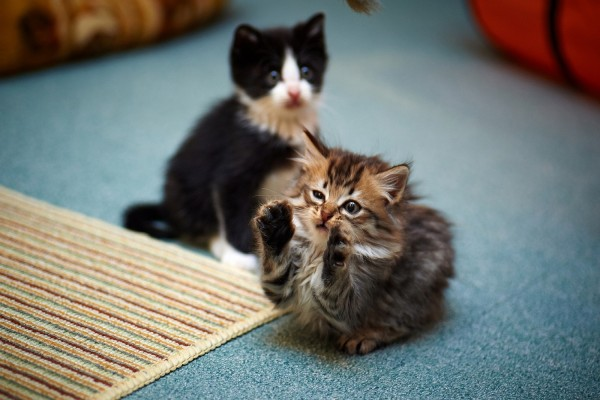Dos gatitos diferentes