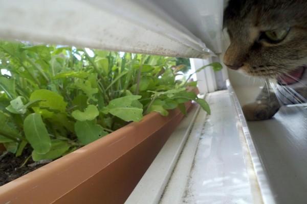 Gato intentando morder las plantas