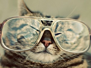 Gato con grandes gafas