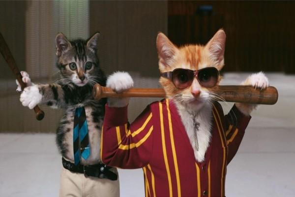 Gatos mafiosos