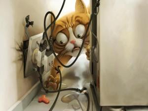 Postal: Gato en peligro