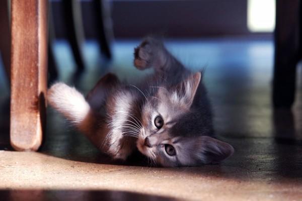 Gatito mirando desde el suelo