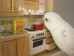 Postal: Periquito cocinero