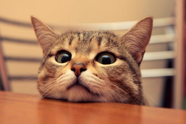 Gato observando sobre la mesa