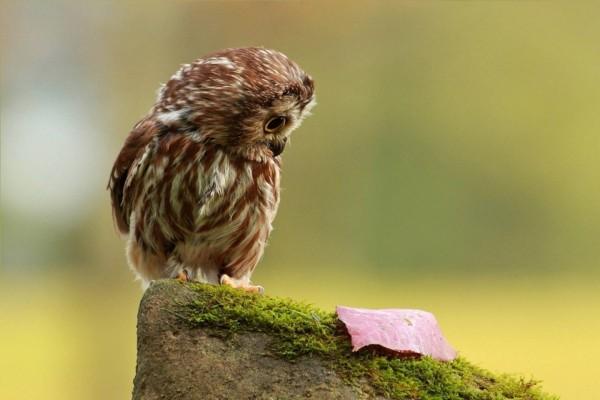Polluelo observando la hoja