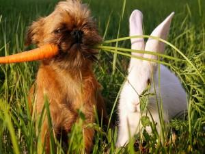 Perro con la zanahoria del conejo