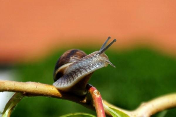 Los cuernos del caracol