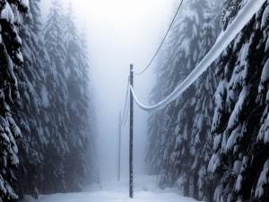 Postal: Bosque cubierto de nieve