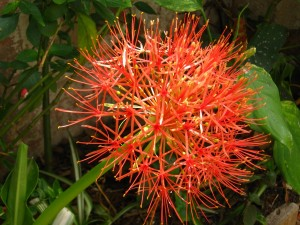 Postal: Bonita flor en el jardín