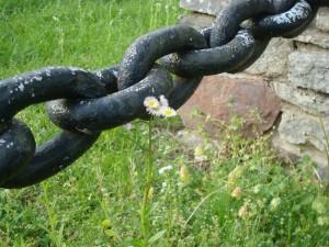 Postal: Gran cadena junto a una margarita