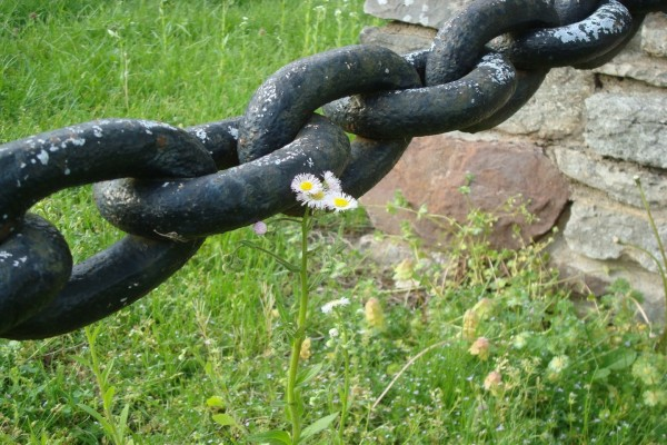 Gran cadena junto a una margarita