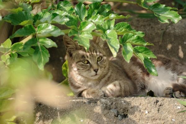 Gato a la sombra de las hojas