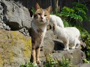 Gatos en las piedras