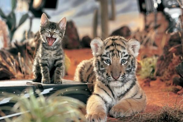 Dos pequeños felinos