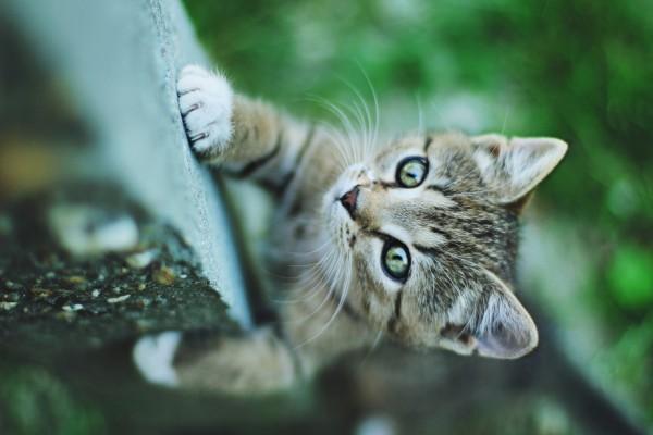 Gato trepando