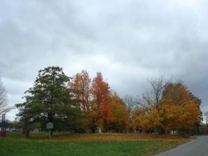 Árboles en otoño junto al cementerio