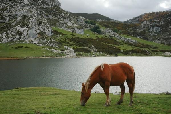 Un caballo comiendo hierba en el lago Ercina (Asturias, España)