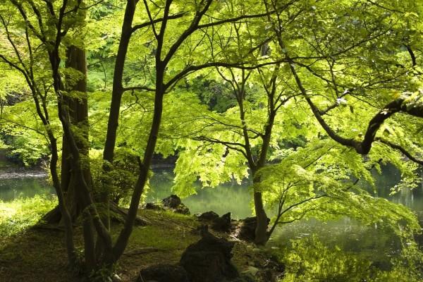 Sombra junto al río