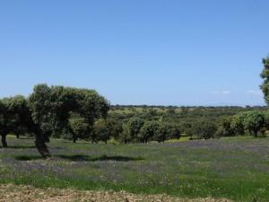 Postal: Dehesa en primavera, España