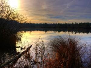 Postal: En el lago a media tarde
