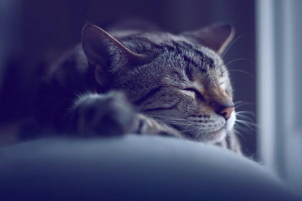 Un bonito gato dormido