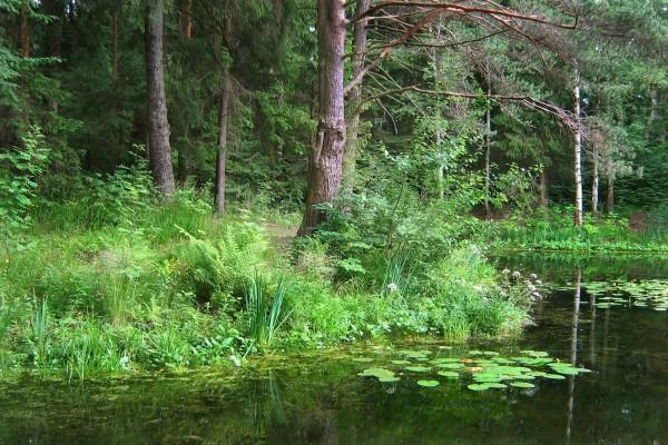 Árboles y plantas junto al agua