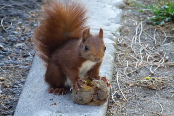 Ardilla agarrando su comida