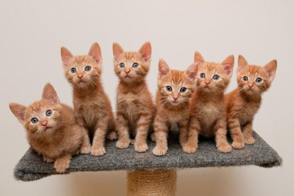 Seis hermanitos muy atentos