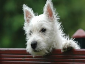 Perrito blanco sobre un banco