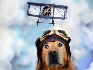 Postal: Perro soñando con volar