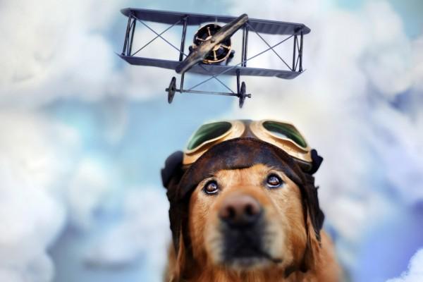 Perro soñando con volar