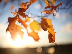 Postal: Hojas otoñales iluminadas por el sol