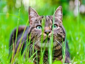 Precioso gato en la hierba