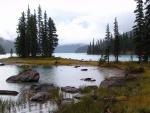 Pinos en el lago