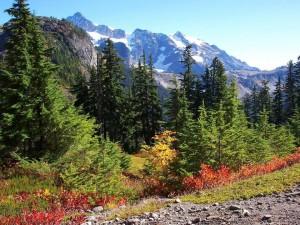 Postal: Árboles y montañas