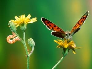 Postal: Mariposa y oruga en una planta