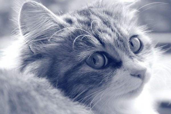 Un joven gatito muy curioso