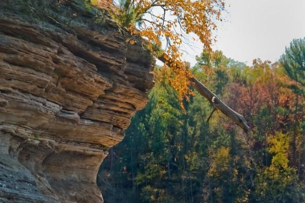 Árbol cayendo de la roca