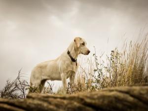 Postal: Bonito perro blanco entre las plantas