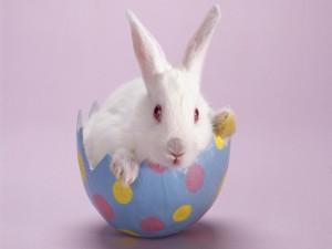 Conejo blanco en un huevo de pascua