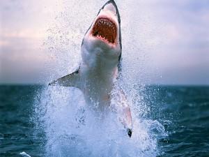 Postal: Tiburón emergiendo de las profundidades