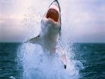 Tiburón emergiendo de las profundidades