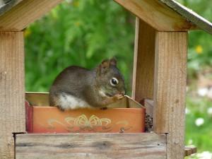 Ardilla en su casita de madera