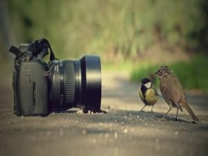 Postal: Pájaros posando para la foto