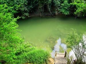 Postal: Lago escondido entre los árboles del bosque