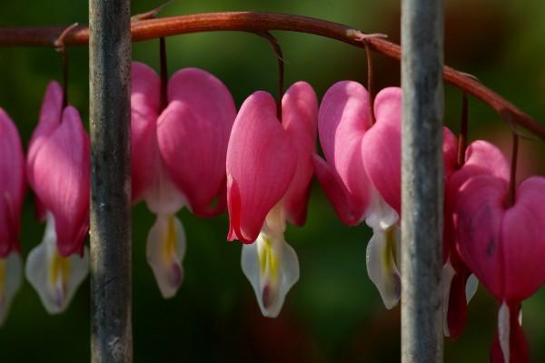 Bonitas flores colgando de la rama