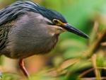Un pájaro con gran pico
